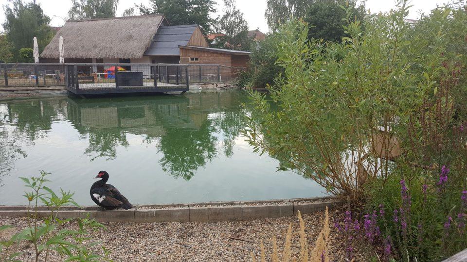 Součástí zooparku je rybníček