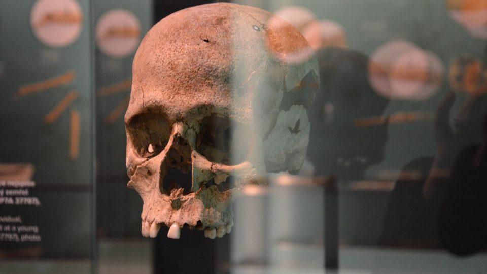 Lebka nalezená na Závisti
